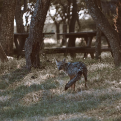 fauna-parque-luro